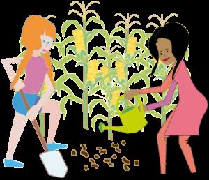Mais - ein wichtiger Energielieferant