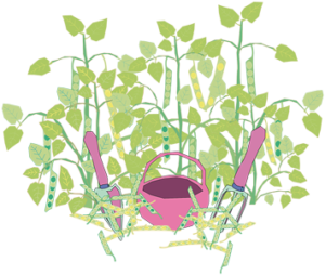Hülsenfrüchte, Stangenbohnen, Erbsen, Buschbohnen sind Grundnahrungsmittel